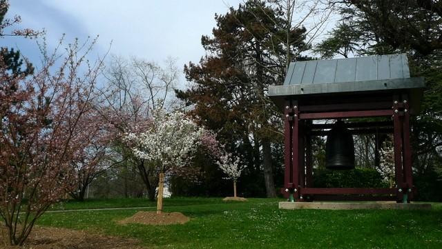 Павильон в окружении цветущих деревьев сакуры и яблонь (фотография автора)